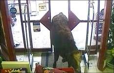 bull in supermarket, бык в супермаркете