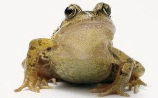 frog Английский язык