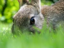 'Rabbit-fearing' German teacher loses case against pupil (Немецкая учительница, боящаяся кроликов, проиграла суд против ученицы)