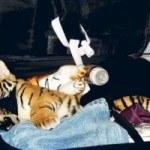 Ten of the most outrageous animal smuggling attempts (Десять самых возмутительных попыток контрабанды животных)